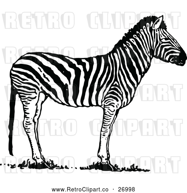 Vector Clip Art of Retro Zebra
