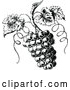 Vector Clip Art of Retro Grapes on the Vine by Prawny Vintage