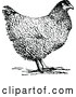 Vector Clip Art of Retro Hen Chicken by Prawny Vintage
