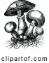 Vector Clip Art of Retro Mushrooms and Roots by Prawny Vintage