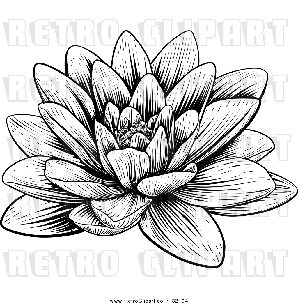 Vector Clip Art Of A Retro Blooming Waterlily Lotus Flower By