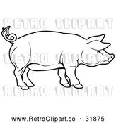 Vector Clip Art of a Cautious Retro Pig Standing Alert and Focuse in Black Outline by AtStockIllustration