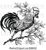 Vector Clip Art of Crowing Rooster in a Tree by Prawny Vintage