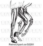 Vector Clip Art of Engraved Diagram of Horse Leg Muscles and Bones in by Picsburg