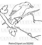 Vector Clip Art of Retro Cartoon Mockingbird in a Tree Line Drawing by Picsburg
