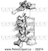Vector Clip Art of Retro Diagram of the Peculiar Dorsal Thoracic Vertebrae in Black and White by Picsburg