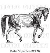 Vector Clip Art of Retro Diagram of Walking Horse Muscles in by Picsburg