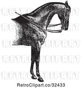 Vector Clip Art of Retro Engraved Horse Anatomy of a Reined Horse with Good Shoulders in by Picsburg
