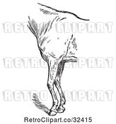Vector Clip Art of Retro Engraved Horse Anatomy of Bad Conformation of Fore Quarters in 4 by Picsburg