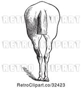Vector Clip Art of Retro Engraved Horse Anatomy of Bad Hind Quarters in 6 by Picsburg