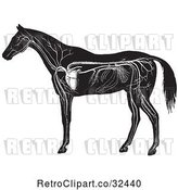 Vector Clip Art of Retro Engraved Horse Anatomy of the Circulatory System in by Picsburg
