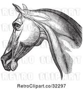 Vector Clip Art of Retro Engraving of Horse Head and Neck Muscles in 1 by Picsburg