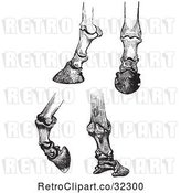 Vector Clip Art of Retro Engravings of Horse Bones and Articulations of the Foot Hoof in by Picsburg