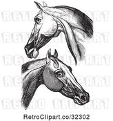 Vector Clip Art of Retro Engravings of Horse Head and Neck Muscles in by Picsburg