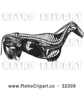 Vector Clip Art of Retro Horse Anatomy of Internal Bones Organs in Black and White by Picsburg