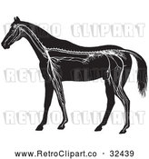 Vector Clip Art of Retro Horse Anatomy of the Nervous System in Black and White by Picsburg