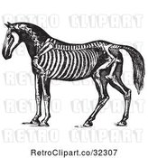 Vector Clip Art of Retro Horse Anatomy of the Skeleton in 1 by Picsburg