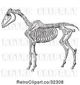 Vector Clip Art of Retro Horse Anatomy of the Skeleton in 2 by Picsburg