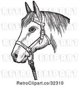 Vector Clip Art of Retro Horse with Good Form for a Halter of in by Picsburg