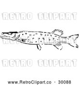 Vector Clip Art of Retro Pike Fish by Prawny Vintage