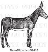 Vector Clip Art of Retro Poitou Donkey Ass in by Picsburg