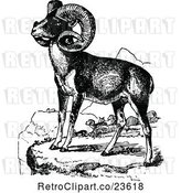 Vector Clip Art of Retro Wild Goats by Prawny Vintage
