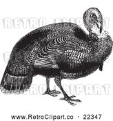 Vector Clip Art of Retro Wild Turkey by BestVector