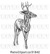 Vector Clip Art of Retro Woodcut Deer Stag in by AtStockIllustration
